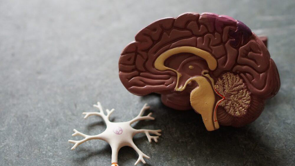 Wpływ marihuany na mózg